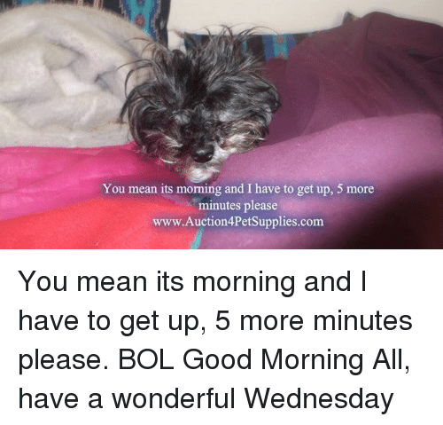 Memes, Good Morning, and Good: You mean its morning and I have to get up, 5 more  minutes please  www.Auction4PetSupplies.com You mean its morning and I have to get up, 5 more minutes please.         BOL     Good Morning All, have a wonderful Wednesday
