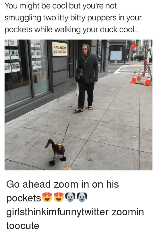Funny, Zoom, and Ducks: You might be cool but you're not  smuggling two itty bitty puppers in your  pockets while walking your duck cool  PARAGON Go ahead zoom in on his pockets😍😍🐶🐶 girlsthinkimfunnytwitter zoomin toocute