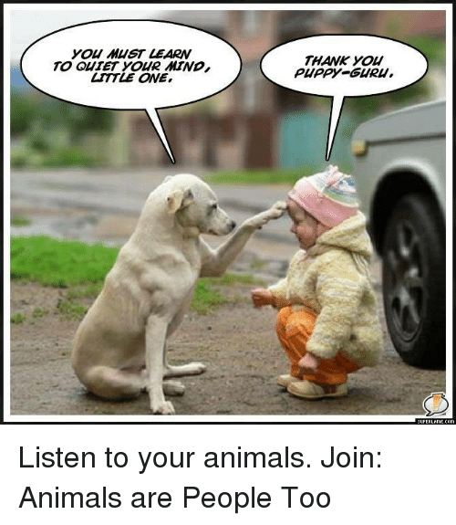 you must learn to quiet your mind little one thank 18778494 you must learn to quiet your mind little one thank you puppy cguru
