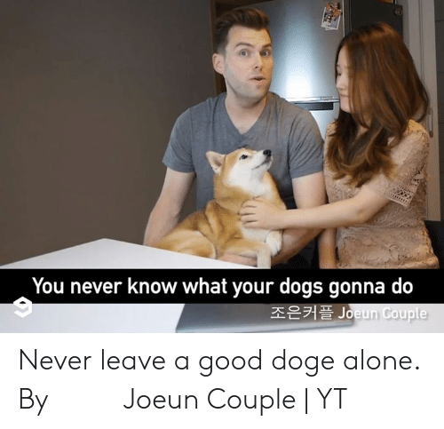 Being Alone, Dank, and Doge: You never know what your dogs gonna do  조은커플 Joeun Couple Never leave a good doge alone.  By 조은커플 Joeun Couple | YT