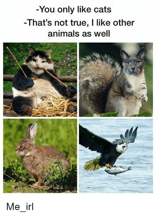 Animals, True, and Irl: -You only like cat:s  -That's not true, I like other  animals as well Me_irl