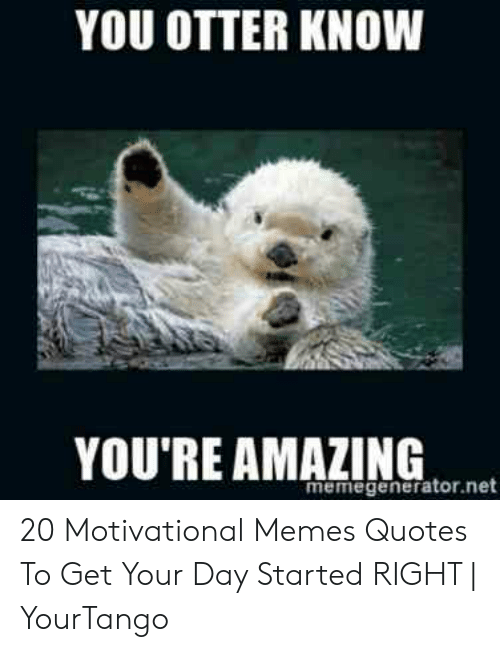 YOU OTTER KNOW YOU\'RE AMAZING Memegeneratornet 20 ...