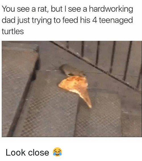 Dad, Memes, and 🤖: You see a rat, but I see a hardworking  dad just trying to feed his 4 teenaged  turtles Look close 😂