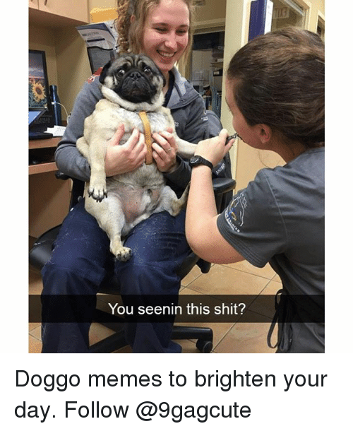 Memes, Shit, and 🤖: You seenin this shit? Doggo memes to brighten your day. Follow @9gagcute
