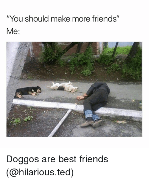 "Friends, Funny, and Ted: ""You should make more friends""  Me: Doggos are best friends (@hilarious.ted)"