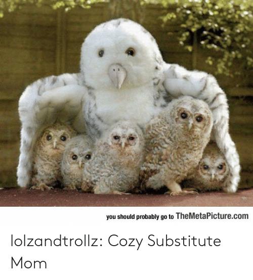 Tumblr, Blog, and Mom: you should probably go to TheMetaPicture.com lolzandtrollz:  Cozy Substitute Mom