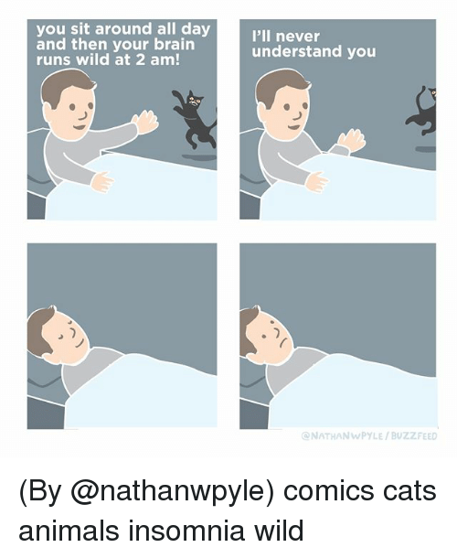 Animals, Cats, and Memes: you sit around all day  and then your brain  runs wild at 2 am!  I'll never  understand you  NATHANWPYLE/BUZZFEED (By @nathanwpyle) comics cats animals insomnia wild