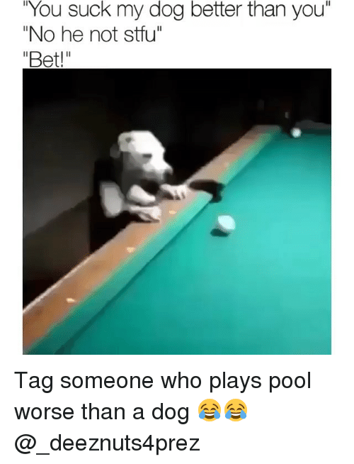 """Memes, Stfu, and Pool: You  suck my dog better than  you""""  """"No he not stfu"""" Tag someone who plays pool worse than a dog 😂😂 @_deeznuts4prez"""