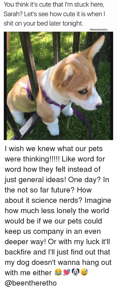 Cute, Future, and Memes: You think it's cute that I'm stuck here,  Sarah? Let's see how cute it is when l  shit on your bed later tonight.  @beentheretho I wish we knew what our pets were thinking!!!!! Like word for word how they felt instead of just general ideas! One day? In the not so far future? How about it science nerds? Imagine how much less lonely the world would be if we our pets could keep us company in an even deeper way! Or with my luck it'll backfire and I'll just find out that my dog doesn't wanna hang out with me either 😂💘🐶😅 @beentheretho
