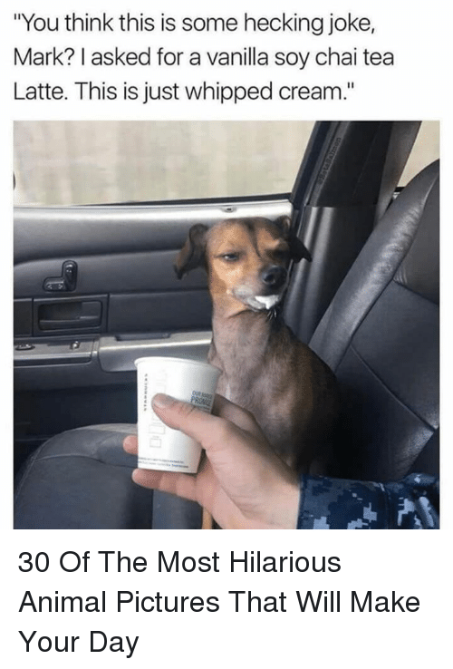"""Animal, Pictures, and Hilarious: """"You think this is some hecking joke,  Mark? I asked for a vanilla soy chai tea  Latte. This is just whipped cream."""" 30 Of The Most Hilarious Animal Pictures That Will Make Your Day"""