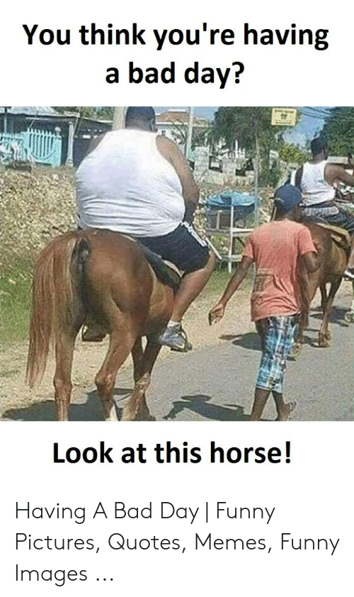 You Think You\'re Having a Bad Day? Look at This Horse ...