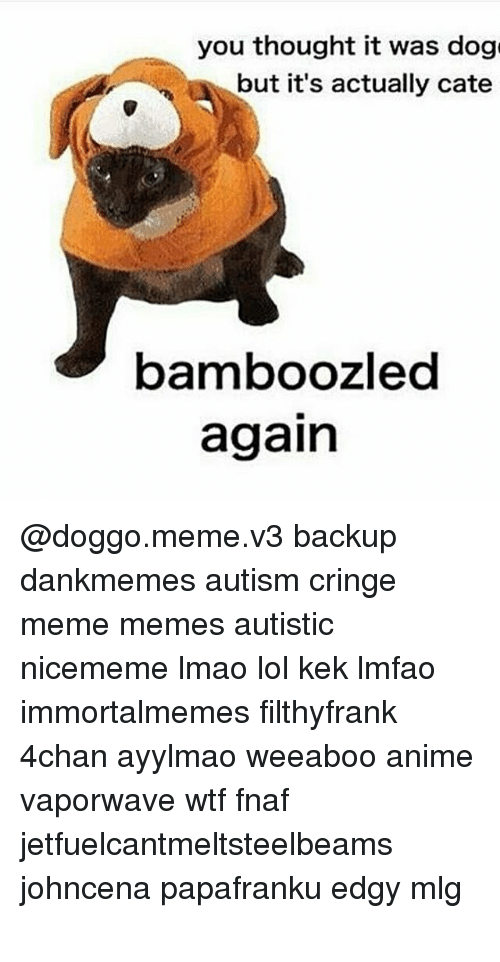 4chan, Animals, and Anime: you thought it was dog  but it's actually cate  bamboozled  again @doggo.meme.v3 backup dankmemes autism cringe meme memes autistic nicememe lmao lol kek lmfao immortalmemes filthyfrank 4chan ayylmao weeaboo anime vaporwave wtf fnaf jetfuelcantmeltsteelbeams johncena papafranku edgy mlg テールナー ポルノの