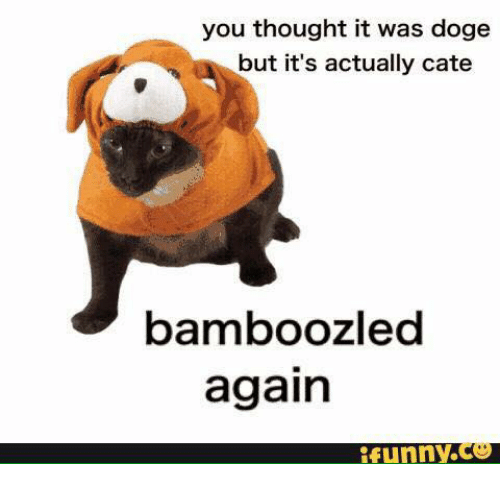 25 best memes about meme doge meme doge memes doge funny and dank memes you thought it was doge but its actually cate bamboozle again funny co solutioingenieria Images