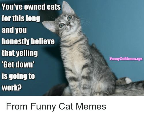 Memes  F F A  And Yelle You Ve Owned Cats For This Long And You