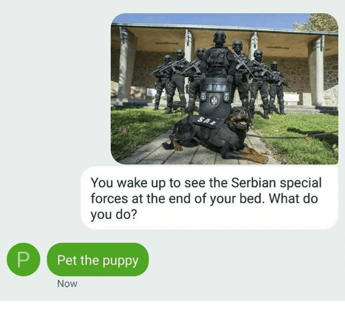 Memes, Serbian, and 🤖: You wake up to see the Serbian special  forces at the end of your bed. What do  you do?  P Pet the puppy  Now