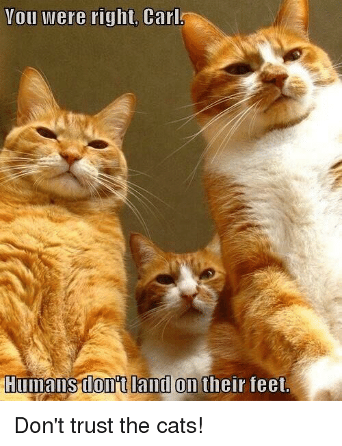 you were right carl humans donot land on their feet 22670656 you were right carl humans donot land on their feet cats meme on