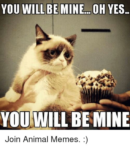 you will be mine oh yes you will be mine join 16565773 you will be mineoh yes you will be mine join animal memes grumpy