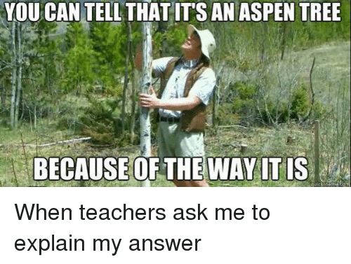Teacher, Aspen, and Tree: YOUCAN TELL THAT ITS AN ASPEN TREE  BECAUSE OF THE WAY ITIS When teachers ask me to explain my answer