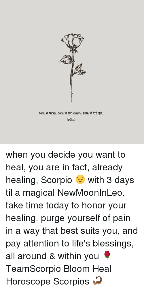 Memes, Best, and Horoscope: you'll heal. you'll be okay. you'll let go  you'l heal you'll be okay. you'l let go.  (ptm) when you decide you want to heal, you are in fact, already healing, Scorpio 😌 with 3 days til a magical NewMoonInLeo, take time today to honor your healing. purge yourself of pain in a way that best suits you, and pay attention to life's blessings, all around & within you 🌹 TeamScorpio Bloom Heal Horoscope Scorpios 🦂