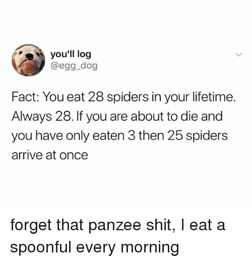 Shit, Lifetime, and Spiders: you'll log  @egg_dog  Fact: You eat 28 spiders in your lifetime.  Always 28. If you are about to die and  you have only eaten 3 then 25 spiders  arrive at once forget that panzee shit, I eat a spoonful every morning
