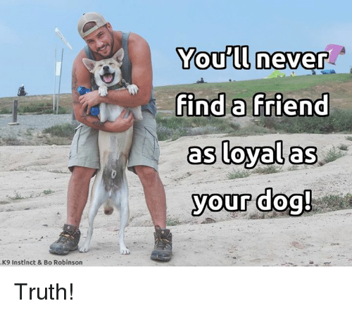 Memes, Never, and Truth: You'll never  find a Friend  as loyal as  your dog!  K9 Instinct & Bo Robinson Truth!