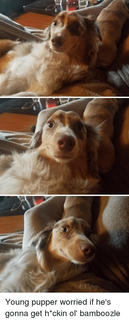 Good, Boy, and Get: Young pupper worried if he's gonna get h*ckin ol' bamboozle