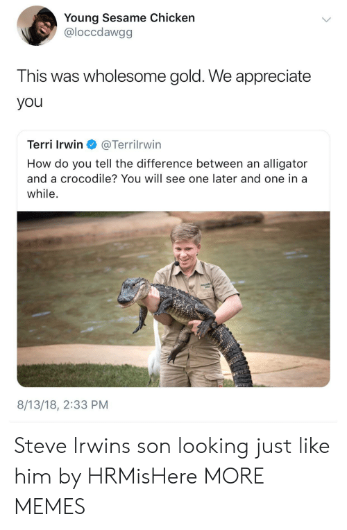 Dank, Memes, and Steve Irwin: Young Sesame Chicken  @loccdawgg  This was wholesome gold. We appreciate  you  Terri Irwin @Terrilrwin  How do you tell the difference between an alligator  and a crocodile? You will see one later and one in a  while  8/13/18, 2:33 PM Steve Irwins son looking just like him by HRMisHere MORE MEMES