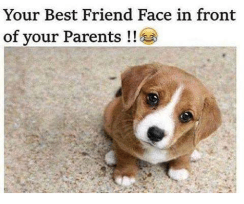 Best Friend, Friends, and Memes: Your Best Friend Face in front  of your Parents