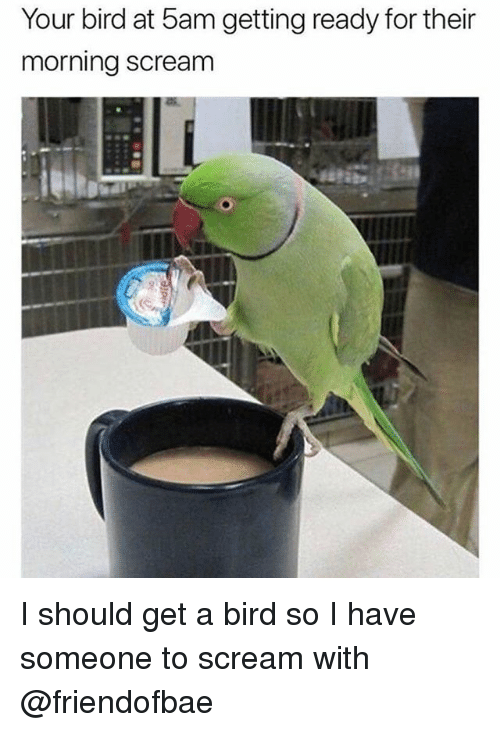 Scream, Dank Memes, and For: Your bird at 5am getting ready for their  morning scream I should get a bird so I have someone to scream with @friendofbae