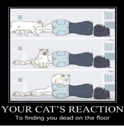 Your Cat S Reaction To Finding You Dead