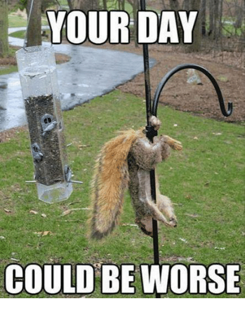 It Could Be Worse Meme YOUR DAY COULD ...