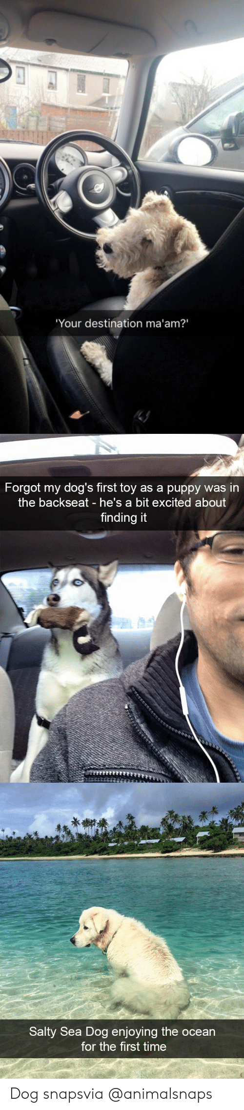 Dogs, Being Salty, and Target: Your destination ma'am?'   Forgot my dog's first toy as a puppy was in  the backseat he's a bit excited about  finding it   Salty Sea Dog enjoying the ocean  for the first time Dog snapsvia @animalsnaps