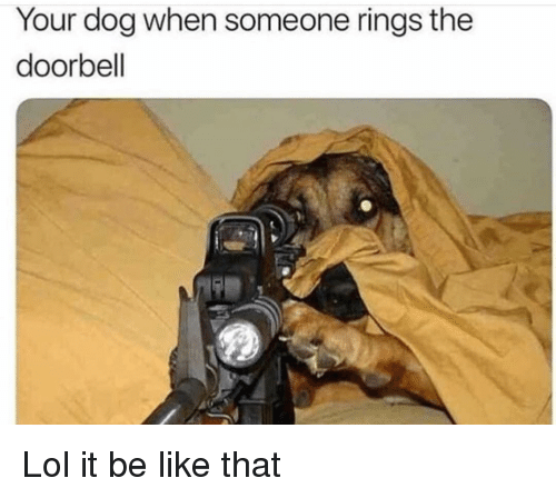 Be Like, Funny, and Lol: Your dog when someone rings the  doorbell Lol it be like that