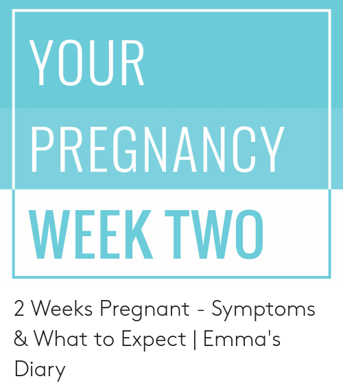 Your Pregnancy Week Two 2 Weeks Pregnant Symptoms What To Expect