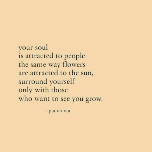 Flowers, Sun, and The Sun: your soul  is attracted to people  the same way flowers  are attracted to the sun,  surround yourself  only with those  who want to see you grow  -pavana