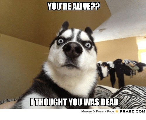 youre alive ithought you was dead memes funny pics 28357047 you're alive? ithought you was dead memes & funny pics frabzcom