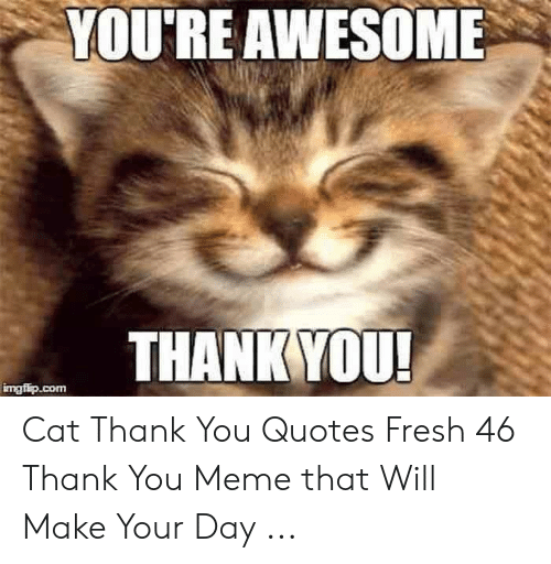 YOU\'RE AWESOME THANK YOU! Imgfipcom Cat Thank You Quotes ...