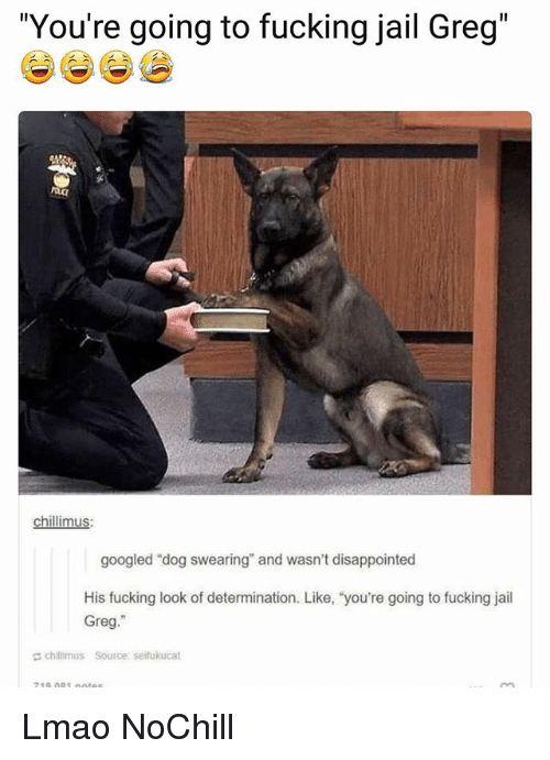 "Disappointed, Fucking, and Funny: ""You're going to fucking jail Greg""  chillimus  googled ""dog swearing"" and wasn't disappointed  His fucking look of determination. Like, ""you're going to fucking jail  Greg.""  chillimus Source: seifukucat Lmao NoChill"
