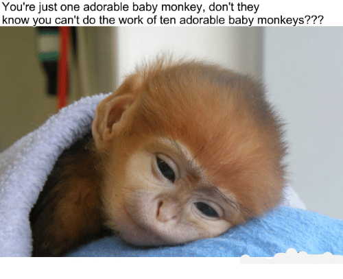 You Re Just One Adorable Baby Monkey Don T They Know You Can T Do