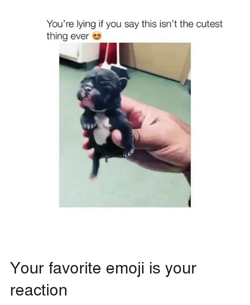 Emoji, Memes, and Lying: You're lying if you say this isn't the cutest  thing ever Your favorite emoji is your reaction