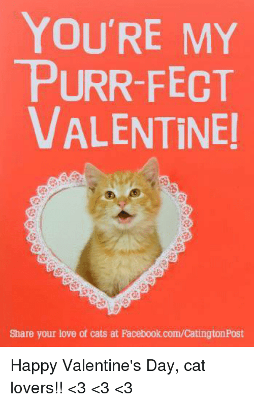 cats facebook and love youre my purr fect valentine - Cat Valentines Day