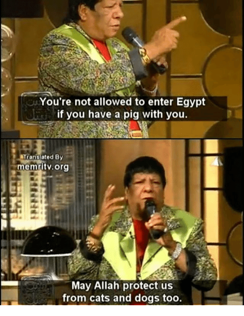 Cats, Dogs, and Memes: You're not allowed to enter Egypt  if you have a pig with you.  Translated By  memritv.org  May Allah protect us  from cats and dogs too.