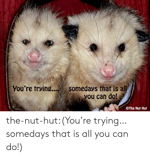 Tumblr, Blog, and Com: You're trying.... somedays that is al  you can do!  The Nut Hut the-nut-hut:(You're trying… somedays that is all you can do!)