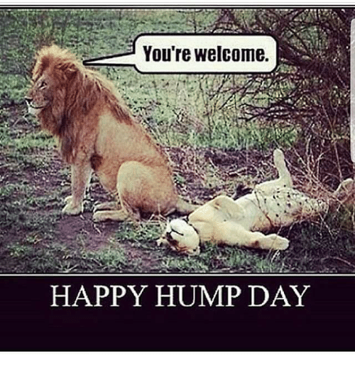 Happy Hump Day Meme Funny : Hump day memes for guys best of the funny meme