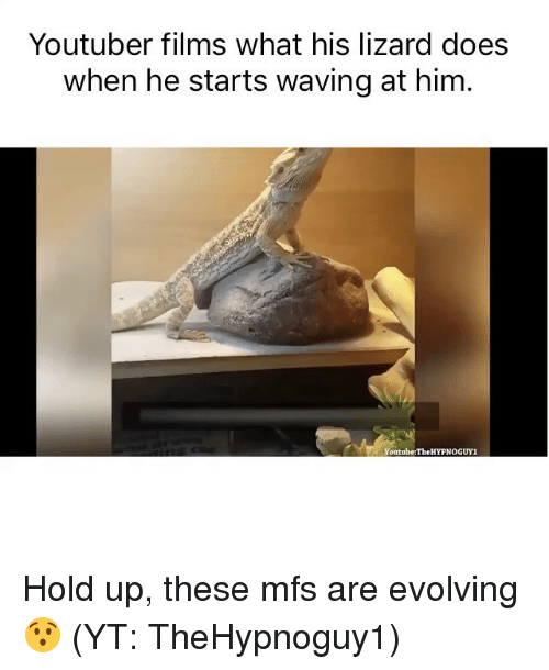 Funny, Memes, and youtube.com: Youtuber films what his lizard does  when he starts waving at him.  Youtube:The HYPNOGUY1 Hold up, these mfs are evolving 😯 (YT: TheHypnoguy1)