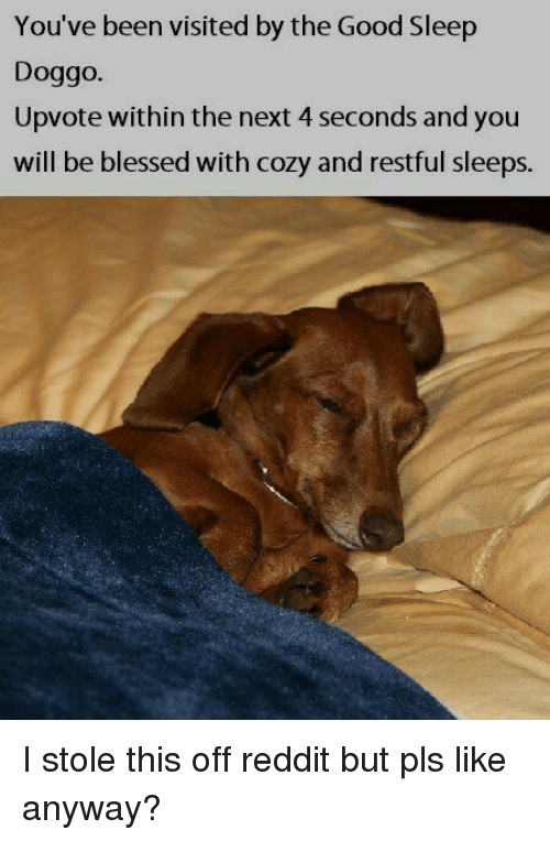 Blessed, Dank, and Reddit: You've been visited by the Good Sleep  Doggo.  Upvote within the next 4 seconds and you  will be blessed with cozy and restful sleeps. I stole this off reddit but pls like anyway?