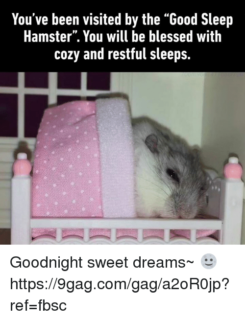 "9gag, Blessed, and Dank: You've been visited by the ""Good Sleep  Hamster"". You will be blessed with  cozy and restful sleeps. Goodnight sweet dreams~ 🌝 https://9gag.com/gag/a2oR0jp?ref=fbsc"