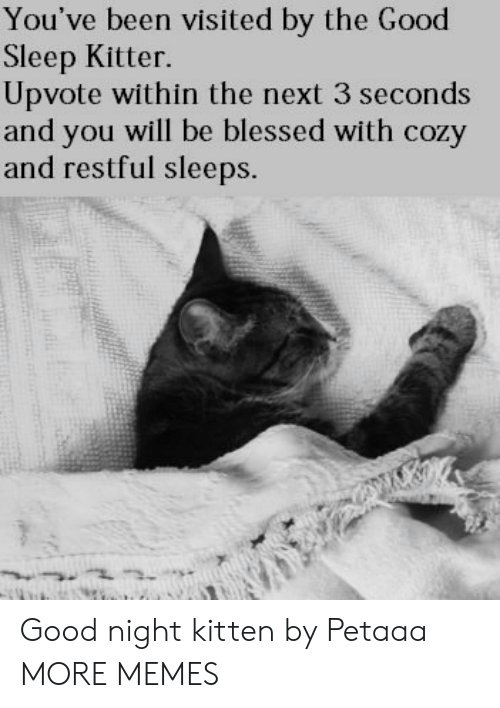 Blessed, Dank, and Memes: You've been visited by the Good  Sleep Kitter.  Upvote within the next 3 seconds  and you will be blessed with cozy  and restful sleeps. Good night kitten by Petaaa MORE MEMES
