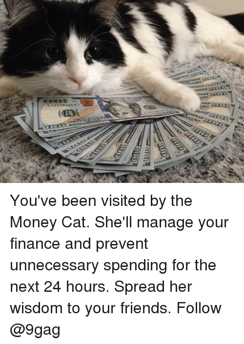 9gag, Finance, and Friends: You've been visited by the Money Cat. She'll manage your finance and prevent unnecessary spending for the next 24 hours. Spread her wisdom to your friends. Follow @9gag