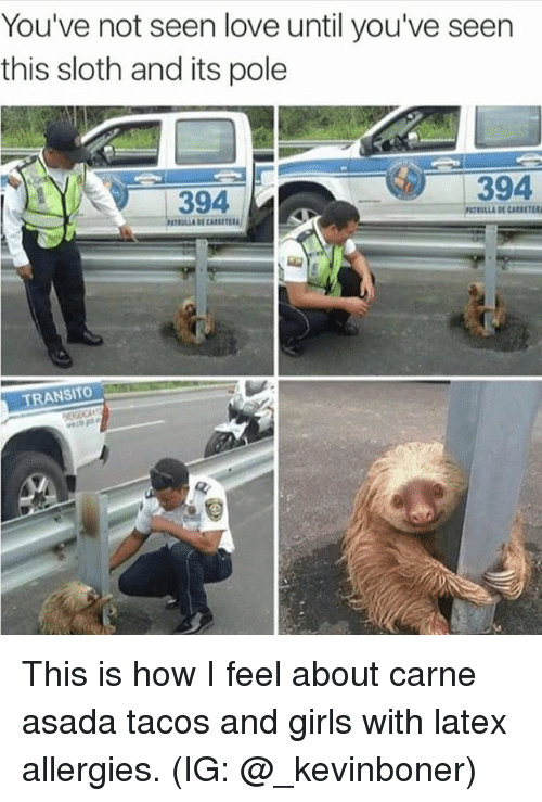 youve not seen love until youve seen this sloth and 27699139 25 best wet sloth memes utterly memes